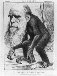 One of the best caricatures of Darwin to follow the publication of <em>The Descent of Man</em> (1871), which stated that the extinct ancestors of humans would have to be classified among the primates.
